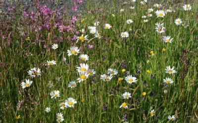 Wildflower_008